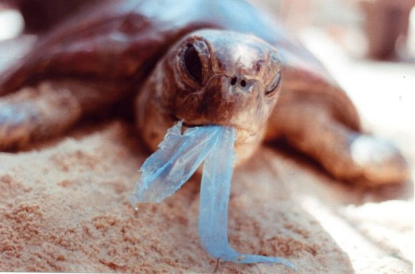 écologie sac poubelles surf kitesurf